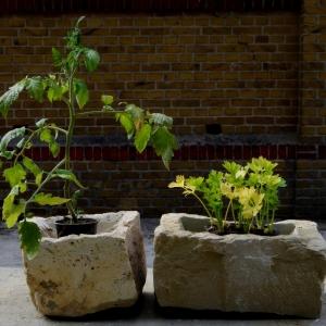 bepflanzte Steine für den Balkon