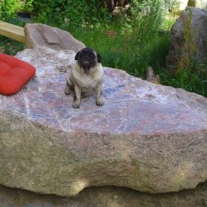 Hund im Freien auf märkischem Finling sitzend