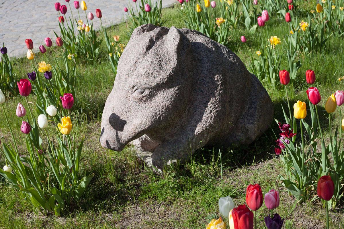 Skulptur eines Wildschweines aus Granit inmitten von Tulpen mit Titel Winterschwein